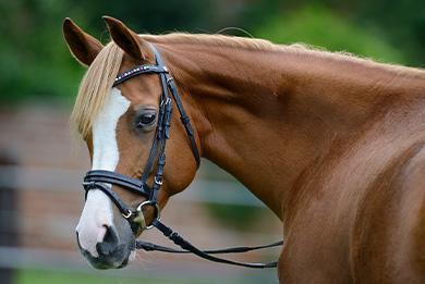 Behandlung von Pferden